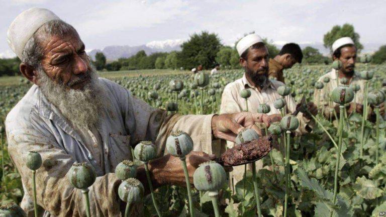 طالبان، تاجران جدید جهانی مواد مخدر: هیرویین، میلیاردها درآمد و بازی های ژئوپولیتک
